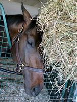 /horse/Beeker Street