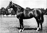 /horse/Anilin