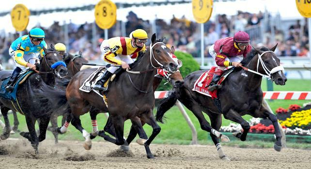 16 May 09: The field for the Preakness passes the stands for the first time at Pimlico Race Course in Baltimore, Maryland on Preakness Day.