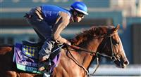 Super Ninety Nine, trained by Bob Baffert, exercises in preparation for the upcoming Breeders Cup at Santa Anita Park on October 30, 2012.