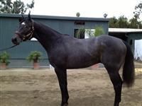 /horse/Coolington