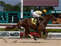 Arsenal (Daniel Centeno up) wins her first race at Tampa Bay Downs on 5/2/10.