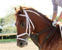 /horse/Danza