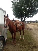 /horse/Bayou Vermilion
