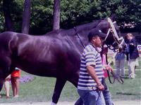 /horse/Mia Poppy
