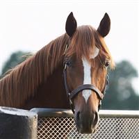 /horse/Z13
