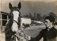 /horse/Don Roberto