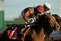 November 6, 2010: Dakota Phone, ridden by Joel Rosario and trained by Jerry Hollendorfer spring the upset in the Breeders Cup Mile at Churchill Downs in Louisville, KY.