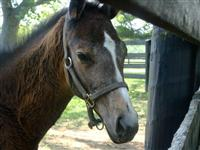 Seans Silverdancer baby pic (courtesy of Lisa Sullivan)