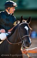 /horse/Ismene