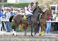 28 March 2009: Third choice Theregoesjojo and jockey Kent Desormeaux enter the track before the grade 1 Florida Derby at Gulfstream Park in Hallandale Beach, Florida.