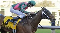 11 February 12: Silver Medallion (no. 4), ridden by Russell Baze and trained by Steven Asmussen, wins the 30th running of the grade 3 El Camino Real Derby for three year olds at Golden Gate Fields in Berkeley, California. (Bob Mayberger/Eclipse Sportswire)