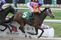 Summer Applause (no. 5), ridden by Robby Albarado and trained by Bret Calhoun, wins the 31st running of the grade 3 Rachel Alexandra Stakes for three year old fillies on February 25, 2012 at Fair Grounds Race Course in New Orleans, Louisiana. (Bob Mayberger/Eclipse Sportswire)
