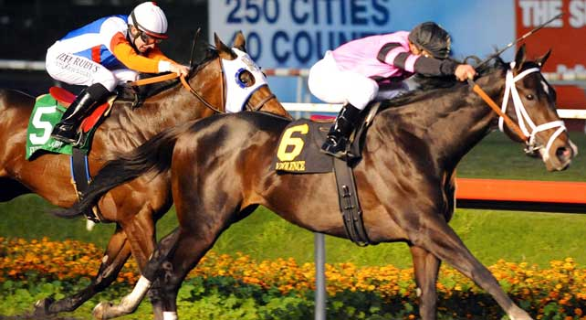 Violence (no. 6), ridden by Javier Castellano and trained by Todd Pletcher, wins the grade 1 CashCall Futurity Stakes for two year olds on December 15, 2012 at Hollywood Park in Inglewood, California. (Bob Mayberger/Eclipse Sportswire)