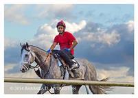 /horse/Harpoon