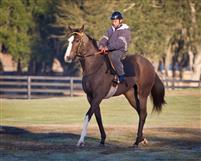 /horse/Volcat