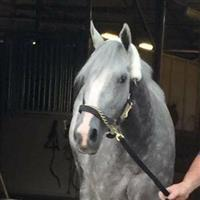 /horse/Tazered