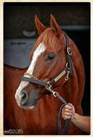 /horse/Res Judicata