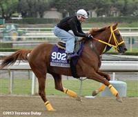 /horse/Indian Jones