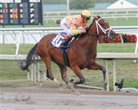 Dame Dorothy wins an Allowance Optional Claiming Race at Gulfstream Park with Javier Castellano in the irons.