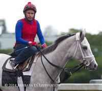 /horse/Hartford 1