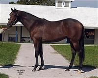 /horse/Bold Challenger