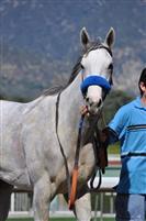 /horse/Zazu
