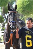 /horse/Potesta 8