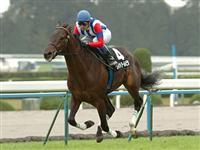 /horse/Victoire Pisa
