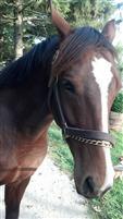 /horse/Chivalrous 1
