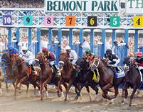 Belmont Park Starting Gate