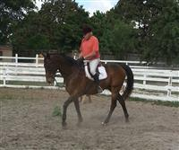 /horse/Coach Ryan