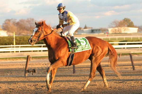 "11 27 2010: 34 - 1 longshot Jersey Town with Cornelio Velasquez win the 22nd running of the Grade I Hill N"" Dale Cigar Mile for 3-year olds & up, at 1 mile, Aqueduct Racetrack, Jamaica, NY. Trainer Barclay Tagg. Owners Charles E. Fipke."