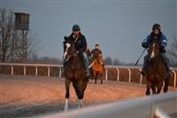 Bourbon Therapy training at Keeneland.