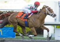 20 March 2010: D'Funnybone and jockey Edgar Prado winning the Swale Stakes at Gulfstream Park in Hallandale Beach, FL.