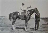 /horse/Tanya