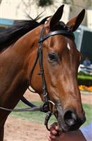 /horse/Star Billing