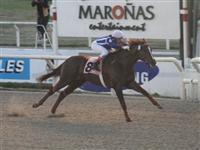 /horse/Brujo De Olleros