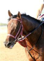 /horse/Jake Mo