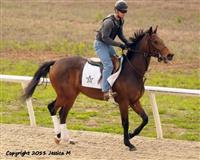 Lisa T training at WinStar Farm
