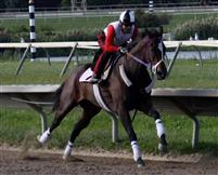 Bounding Bi working at PARX