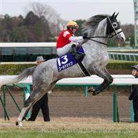 /horse/Gold Ship
