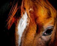 /horse/Mr Cowboy 1