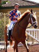 /horse/Victoria Reel