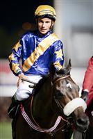 /horse/Gloria De Campeao