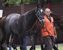Mizzen's Wake is happily retired at Grand 40 Stables in Gretna, LA; pre race picture at Saratoga, 2004