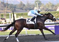 /stakes/Breeders Cup Distaff Ladies Classic