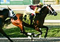 Feb 2010: Discreetly Mine and Javier Castellano lead into the first turn of the Risen Star Stakes at the Fairgrounds in New Orleans, La.