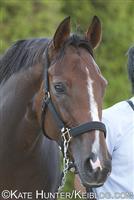 /horse/Apapane