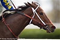 /horse/Hildas Passion